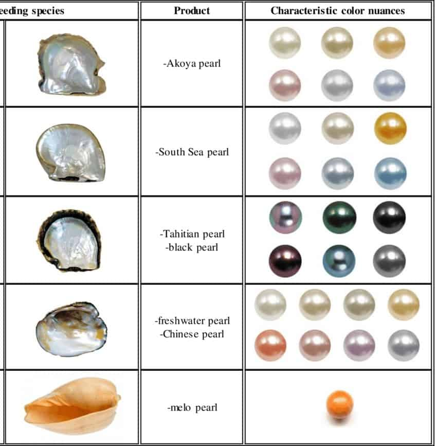 Different types of pearl producing species